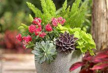 Garden Ideas / by Karen