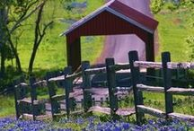 Covered Bridges / by Donna R. Thompson
