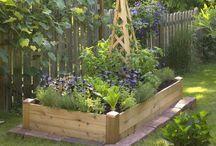 garden / by Rachael D. Weidner