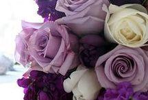 Lovely Lavender / by Everett Stunz