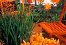 O is for Orange / Using orange tones in the garden