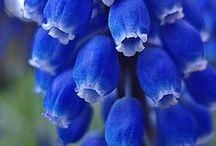 "Feeling indigo, but not blue / Okay, yes, blue in the garden, but ""Garden Blues"" sounded sad."