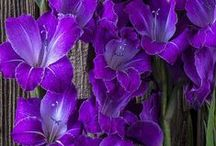 Passion for Purple / So many tones and textures of purple in the garden! Let's explore.