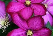 Magenta Madness / Not quite purple, not really pink-- magenta gets its own category because it's awesome!