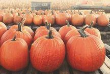 Fall / by Kristy Ryan