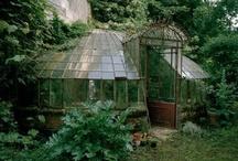 Greenhouses / by Daniel Correia