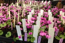 Plant Sales & UWBG Events / by UW Botanic Gardens