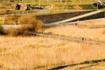 Wetland Restoration / by Daniel Correia