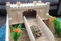 Tortoise / Ideas and Information for my Sulcata Tortoise, Kent