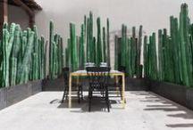 Gardens / by Vivian Panagos