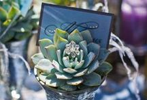 Wedding Succulents / Succulents are small desert-dwelling plants that grow in fun shapes & bold hues of green.