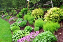 Landscaping Ideas / by Heath Perry