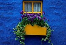 Dazzling Blue  / Dazzling blue, cobalt