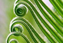 Green Inspiration / Beautiful greens