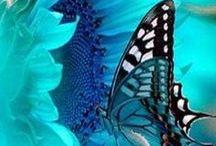 Turquoise Inspiration / gorgeous turquoise