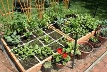 gardening / by Elaine Benson