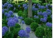 Landscape Inspiration / Here's a wide variety of ideas on how to create and live in the landscape you dream of! / by Proven Winners Plants