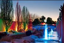 Light Up The Gardens For The Holiday / Wherever you are this holiday, try to stop by a local arboretum or botanical garden to enjoy their holiday light displays. GET OUTSIDE THIS HOLIDAY! / by Proven Winners Plants
