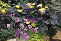 Proven Winners Top Pins of 2014--The Best of the Best / 2014 was a great year! Here's the pins that our Pinterest fans found the most interesting--a wide assortment of plants, outdoor design, holiday and color ideas that many found of interest. / by Proven Winners Plants