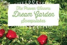 "Proven Winners Dream Garden Sweepstakes / What would you plant in your dream garden? Create your own ""Dream Garden"" board. Three winners will each be awarded $250 customized plant packages from Proven Winners! Visit this page to play: http://contests.tailwindapp.com/proven-winners/dream-garden-sweepstakes. / by Proven Winners Plants"