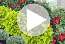 P. Allen Smith videos / Learn from renowned Southern plantsman P. Allen Smith as he charms you with tips and tricks for your growing your home garden in this set of entertaining videos.  / by Proven Winners Plants