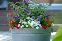 Inspiring Garden Videos / Do you love gardening, but feel like you don't know exactly where to start with your ideas? These short videos will inspire you to try your hand at creating plant combinations, making holiday arrangements for your home, or simply trimming a shrub. Let Laura, our friend from Garden Answer, show you how easy the gardening world can be!