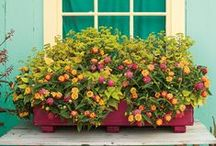 Window Boxes / Adding flower boxes to accent your windows, porch or deck is a fun weekend DIY gardening project. Select a window box that matches your taste and outdoor decor, and then decide whether you'll need plants for sun or shade. Flower boxes can also be used to create a border around your patio, or can be hung from sturdy deck rails too. Click on any photo to learn how to make each design.