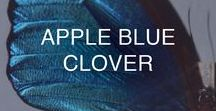APPLE & BLUE CLOVER