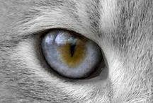 MEOW / #Cats #Kittens #Felines