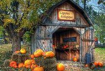 Autumn / by Sarah Gill @ Alderberry Hill