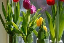 indoor gardening / by Susan DeVries
