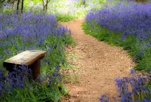 ~Choose Your Path.................