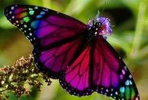 butterflies / by Susan DeVries