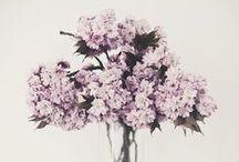 Las flores / by Catalina Fuentealba