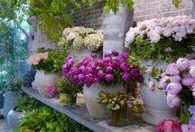 ~Pots and Petals~