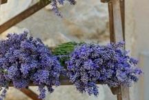 FLOWERS ~ LAVENDER / #lavender