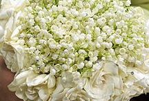 LILY OF THE VALLEY / LILY OF THE VALLEY