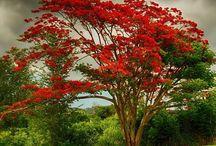 Puerto Rico / Isla del Encanto, isla donde nací mi bello Puerto Rico nunca te alejes de mí.
