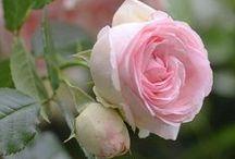 ~Pretty Petals~