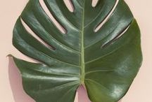 the new (retro hip) green / botanical, tropical green for indoor and outdoor