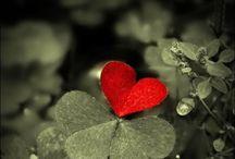 ~Hearts & Valentine's~ / Hearts Love & Valentines ❤️