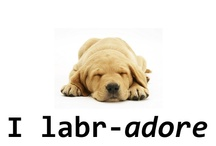 Labradors / by Mary Ann Brainard