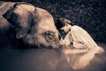 Wondrous creatures of thy world.