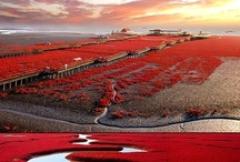 Red / by Hotels & Villas Selection