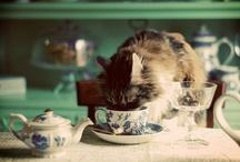 Cat Lady / by Hope Meadows Kasrai