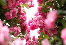Garden / Beautiful flowers, plants, and flower gardens.