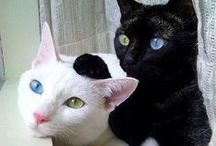 Kitty Corner / Adorable, lovable, and fluffy domestic cats and kittens!