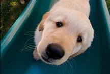 doggies / by Mary Winfrey