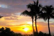 Living in Paradise / The landscape and scenery of South Florida. / by WPBT2