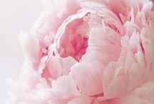 Flowers,all days / by Marta Cuadrado